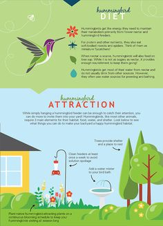 Learn About the Amazing Hummingbird: How to Attract, Feed and Protect Them! Hummingbird Nectar, Hummingbird Flowers, Hummingbird Garden, Hummingbird Quotes, Hummingbird Pictures, Hummingbird Migration, Humming Bird Feeders, Humming Birds, How To Attract Hummingbirds