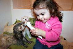 Feeding her ferrets their vitamins
