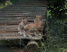 love what I do - alles was mein Herz begehrt: Wildpark Tambach