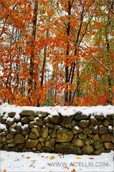 stone walls are abundant in maine.  they please my eyes and make me smile....