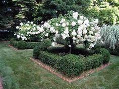 boxwood hedges - Bing Images