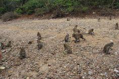 Kangaroo, Animals, Baby Bjorn, Animais, Animales, Animaux, Kangaroos, Animal