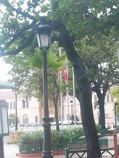 Banderas en la placita en San Juan.