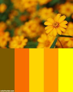 Flower Field Color Scheme