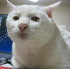42 Mejores Imagenes De Memes De Michi En 2020 Meme Gato