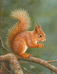 squirrels in paintings - Google Search