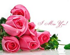 Lovely Roses Miss U Quotes HD Wallpapers Download at Hdwallpapersz.net