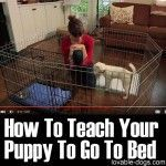 How To Teach Your Puppy To Go To Bed