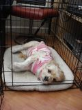 Helpful Tips for Crate Training Your Dog