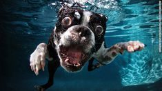 CNN.co.jp : 犬の「変顔」写真が話題に、水中のユニークな表情を撮影 - (3/3)
