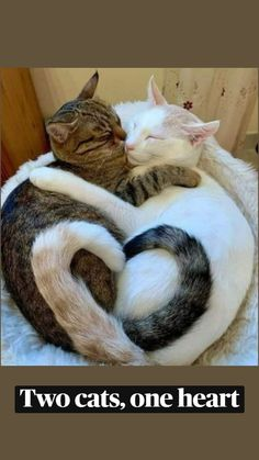 Animal Hugs, Animal Jokes, Funny Animal Memes, Funny Animal Videos, Funny Cute Cats, Cute Funny Animals, Cute Baby Animals, Animals And Pets, Cute Little Kittens
