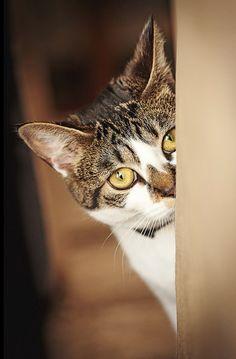 Another peeking cat.