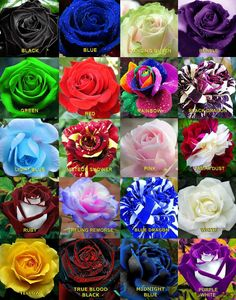 50 Rare Rainbow Rose Flower Seeds Your Lover Multi Color Plants Home Garden