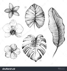 Hand drawn tropical flowers and plants. Pencil drawing - buy this stock illustration on Shutterstock & find other images. Hawaiian Flower Drawing, Hawaiian Flower Tattoos, Flower Art, Hibiscus Flower Drawing, Tropical Flowers, Hawaiian Flowers, Hawaiian Plants, Leaf Drawing, Plant Drawing