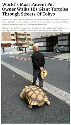 I'm Taking The Tortoise Out For A Walk Honey. See You Next Week!