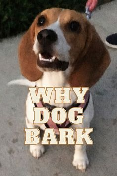 Wonderful Dog Barking Any Pet Owner Can Use Stop Dog Barking, Your Dog, Pets, Artwork, Animals And Pets, Art Work, Work Of Art, Auguste Rodin Artwork