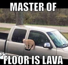 Funny Cat Memes Of The Day 35 Pics & Funny Cat Quotes The post Funny Cat Memes Of The Day – 35 Pics appeared first on Animal Memes. Funny Animal Jokes, Stupid Funny Memes, Cute Funny Animals, Funny Relatable Memes, Funny Quotes, Meme Chat, Really Funny Memes, Funny Animal Pictures, Funny Images