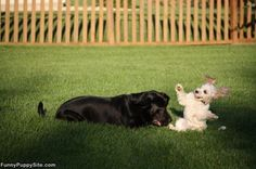 Caring for Dogs that are Hypoallergenic for Humans
