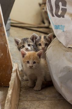 Gang of cats ..