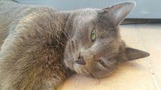 Naja #gatto #sardegna