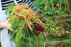 Discover the joys of fall gardening and cold-weather vegetables! Eat from your garden well into autumn by choosing plants wisely and installing simple season-stretching devices.