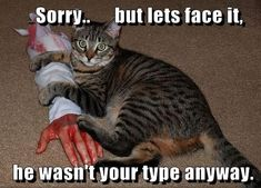 Sorry.. but let's face it, he wasn't your type anyway. #catoftheday