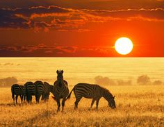 J'adore ces animaux! Ils sont mes préférer!!!!!!!!!!!!!!!!!!!!!!!!!!!!!!!!!!!!