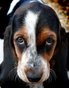 Omg my hound does this face all the time and I find it so adorable!