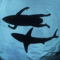 outstanding shots of sharks