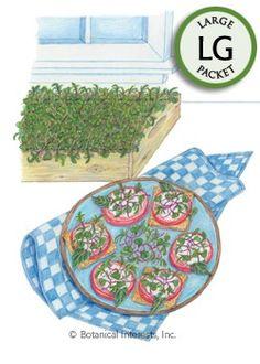 Microgreens Red Winter Kale HEIRLOOM Seeds (LG)
