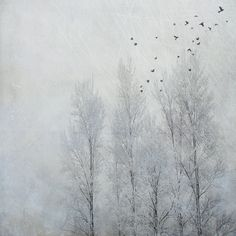 for your eyes only... by jamie heiden, via Flickr