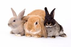 Have you ever heard of 'The Rabbit Test'? A lost way of finding out if women were pregnant using, you guessed it, rabbits...