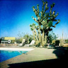The Joshua Tree Inn