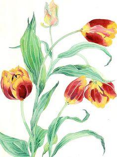 yellow and red tulips 4 | yellow and red tulips watercolour … | Flickr