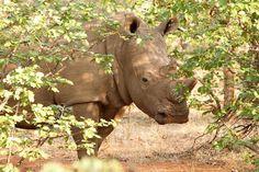 Rhino Orphanage South Africa. Photo by Simon Espley. #WorldRhinoDay