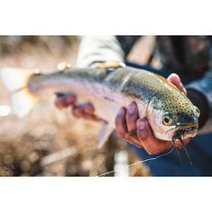 Fishing Photos, Fishing Photography, Cabins In The Woods, Fly Fishing, Alaska, Instagram, Fly Tying, Camping Tips