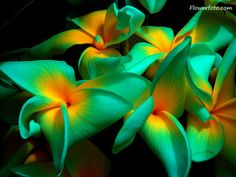tropical flowers - Google Search