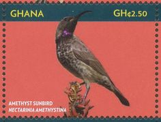 Amethyst Sunbird stamps - mainly images - gallery format