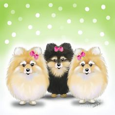 The sisters 3 very cute Pomeranian sisters.  Art by Catia Cho.  All rights reserved.