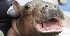 -Datei 'Fabelhafte Tieraufnahmen!.'- Eine von 1353 Dateien in der Kategorie 'Tiere' auf FUNPOT. Kommentar: Fabelhafte Tieraufnahmen!