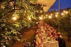 Manjimup Cherry Harmony Festival Western Australia, Regional, Festivals, Cherry, Sweet Home, Explore, Table Decorations, Home Decor, Decoration Home