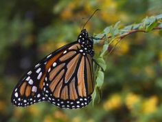 Butterfly Gardens and Sanctuaries