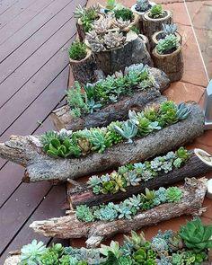 Succulents in Hollowed Out Logs - Sukkulenten - Best Garden Ideas Succulent Gardening, Succulent Terrarium, Succulents Garden, Garden Pots, Succulent Ideas, Propagate Succulents, Terrarium Ideas, Balcony Garden, Diy Garden