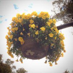 ...#macetas #colgantes #decoración de #primavera en #vía #pública #huechuraba