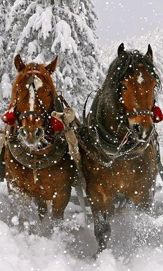 Two Beautiful Horses Dashing Through the Snow Pulling a Sleigh. Two Beautiful Horses Dashing Through the Snow Pulling a Sleigh. Pretty Horses, Horse Love, Beautiful Horses, Animals Beautiful, Cute Animals, Anime Body, Winter Szenen, Foto Gif, Christmas Scenes