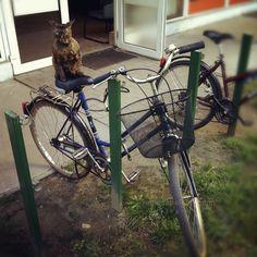 Zwierzęta pozostawione w środkach komunikacji | miloszpoloch fotografia blog