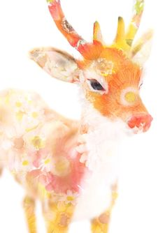 ceremony-deer, 植松琢麿 Takuma Uematsu, 2008。再pin一張ceremony系列。
