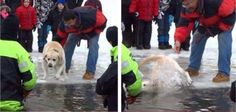 Dog thrown into icy water by callous owner at Polar Plunge event! Condemn the incident now! | YouSignAnimals.org
