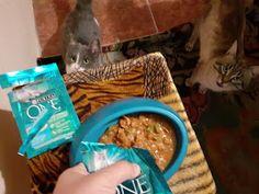 Day by day: PURINA ONE® BIFENSIS - pentru pisicuță sănătoase și frumoase Omega 3, Chicken, Meat, Food, Hoods, Meals, Kai