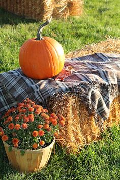 A bale of hay, a pretty orange pumpkin, a plaid blanket and fall mums... they all come together for beautiful outdoor decor for fall. Click through to see more fall decorating ideas by Liz Fourez of Love Grows Wild.  || @lovegrowswildlf